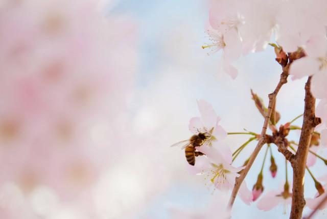 Primavera in fiore