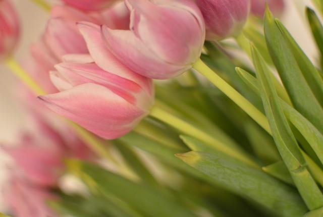 Mazzo di tulipani rosa
