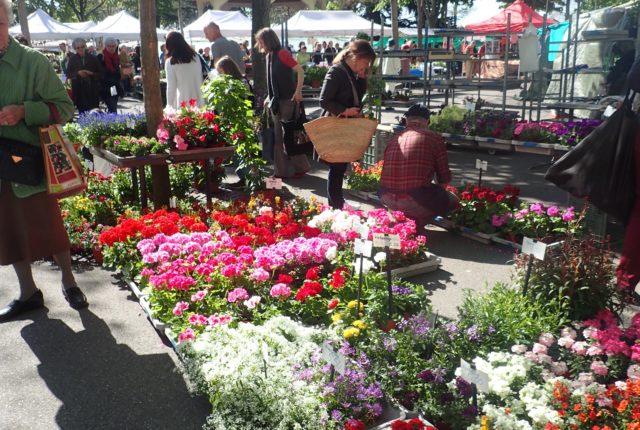 Mercato di fiori a Zurigo
