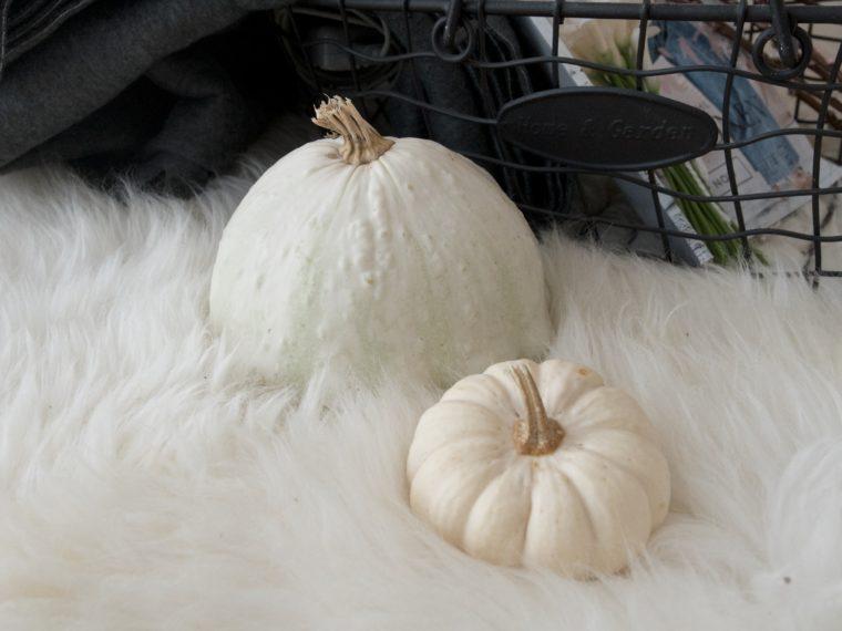 Zucche bianche da decorazione